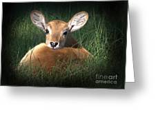 Bambi Greeting Card