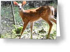 Bambi1 Greeting Card