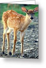 Bambi2 Greeting Card