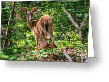 Bambi's Mom Greeting Card