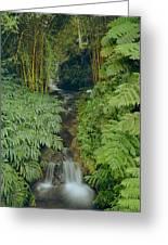 100837-bamboo And Ferns Creek  Greeting Card