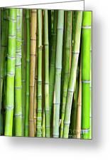 Bamboo Background Greeting Card by Carlos Caetano