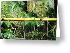 Bamboo Crossing Greeting Card