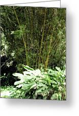 F8 Bamboo Greeting Card