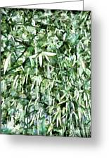 Bamboo Forest In South Carolina Greeting Card