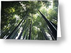 Bamboo Forest Greeting Card by Mitch Warner - Printscapes