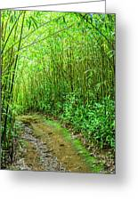 Bamboo Forest Trail Greeting Card