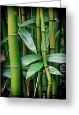 Bamboo Green Greeting Card