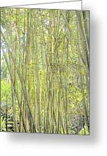 Bamboo In San Diego Zoo Greeting Card