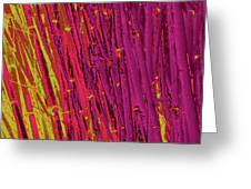Bamboo Johns Yard 22 Greeting Card