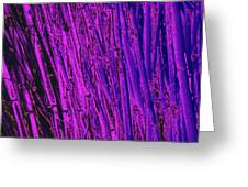 Bamboo Johns Yard 24 Greeting Card
