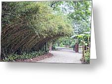 Bamboo Overhang Path  Greeting Card