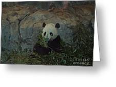 Bamboo Thats For Dinner Greeting Card