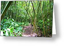 Bamboo Trail Greeting Card