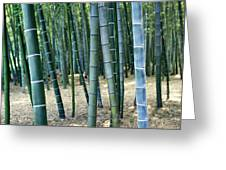Bamboo Tree Forest, Close Up Greeting Card