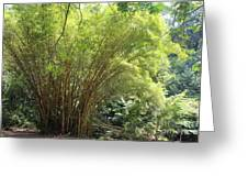 Bamboo Trees In Garden Of Eden Greeting Card