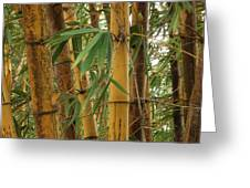 Bamboos Greeting Card