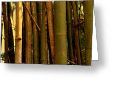 Bambusa Vulgaris Greeting Card