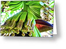 Banana Bells Greeting Card