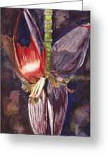 Banana Bloom Greeting Card