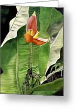 Banana Blossom Greeting Card