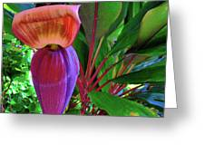 Banana Plant Flower And Leaves Greeting Card
