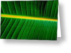 Banana Plant Leaf Greeting Card