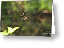Banana Spider In Web Greeting Card