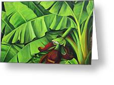 Banana Tree Flower Greeting Card