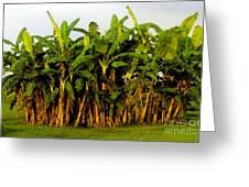 Banana Trees Greeting Card