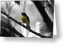 Bananaquit Greeting Card