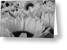 Band W Sunflowers Greeting Card
