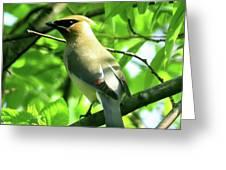 Bandit Bird Greeting Card