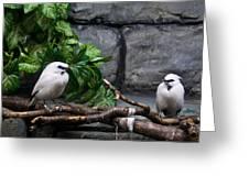 Bandit Birds Greeting Card