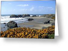 Bandon 4 Greeting Card