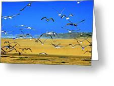 Bandon Gulls Greeting Card