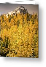 Banff Golden Larch Dream World Greeting Card
