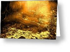 Banishing Rain Forest Shadows Greeting Card