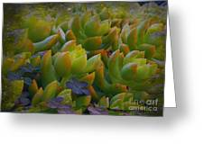 Bank Of Succulents Greeting Card