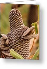 Banksia Cone 2 Greeting Card