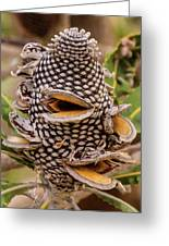 Banksia Cone Greeting Card