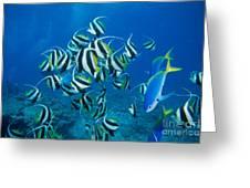 Bannerfish School Greeting Card