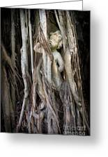Banyan Grows Over Statue Greeting Card