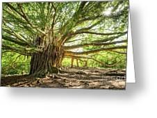 Banyan Star Greeting Card