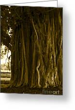 Banyan Surfer - Triptych  Part 1 Of 3 Greeting Card