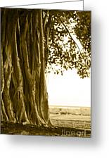 Banyan Surfer - Triptych  Part 2 Of 3 Greeting Card