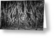 Banyan Tree Greeting Card