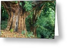 Banyan Tree Haleakala National Park Greeting Card