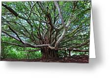 Banyan Tree Greeting Card
