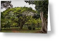 Banyon Monkeypod Landscape II Greeting Card